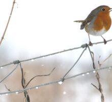 Robin singing on wire fence Sticker