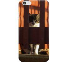 Beware of the cat iPhone Case/Skin