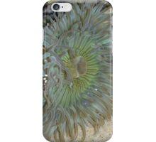 Blue Green Sea Anemone iPhone Case/Skin