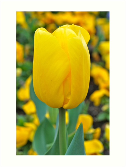 Yellow as the Sun by Penny Smith