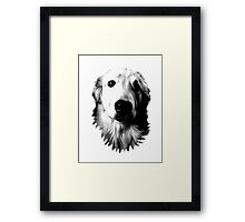Who Me? Funny Dog Expressions. Golden Retriever Images. Framed Print