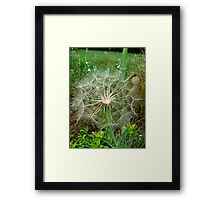 Fluffy ball Framed Print