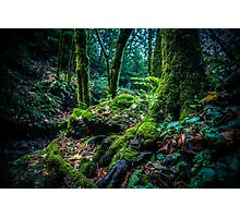 Into The Woods Photographic Print