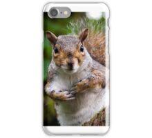 Curious squirrel iPhone Case/Skin