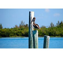 Pelican at The Inlet Ft. Pierce, Florida Photographic Print