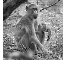 Mother and Baby Baboons - Black and White Photo Photographic Print