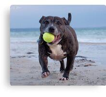 Dog With Tennis Ball Canvas Print