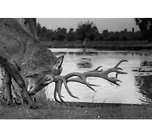 Majestic Deer in Richmond Park Photographic Print