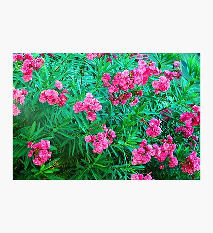 May Flowers In Ft. Pierce, Florida Photographic Print