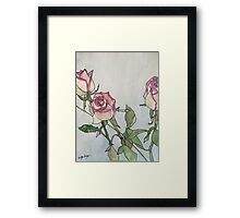 Roses of White and Pink Framed Print