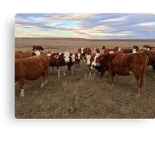Love cows Canvas Print