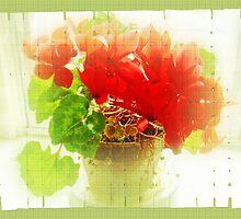Red Cyclamen on Windowsill by MotherNature2