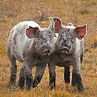 Two Muddy Pigs by Heather Crough