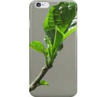 Baobab foliage iPhone Case/Skin