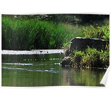 Top Tier Pond at Lisle Community Park Poster