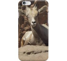 Bighorn Sheep Lamb iPhone Case/Skin
