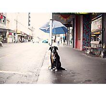 The Dog Photographic Print