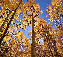 """Aspen#7"" by johnny gomez"