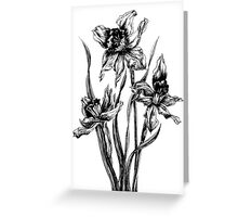 First Flowers of Spring Greeting Card
