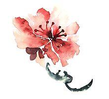 Sakura flower Photographic Print