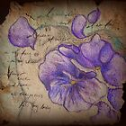 Winter Violets by Erika .