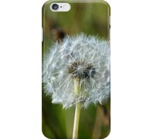 Dandelion on the Downs iPhone Case/Skin