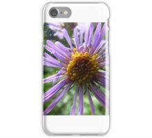 Aster flower iPhone Case/Skin