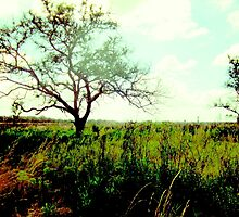 Myakka State Park Prairie by Tarynn Jenna