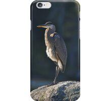 Immature Great Blue Heron iPhone Case/Skin