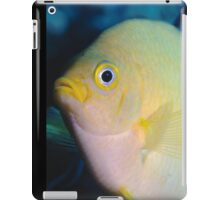 Golden Damsel, Great Barrier Reef off Cooktown, Australia iPad Case/Skin