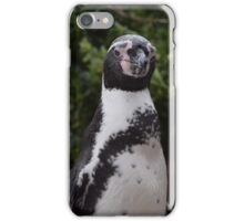 African Penguin iPhone Case/Skin