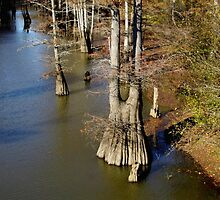 Crooked Creek Bayou at Low Watewr by WildestArt