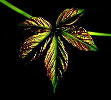 The Leaf  by katpix