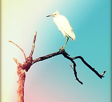 Watchful Egret by Chris Andruskiewicz