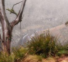 Ghost Gums and Misty valleys by Clare Colins