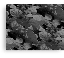 Hydrangea Flowers In Black And White Canvas Print