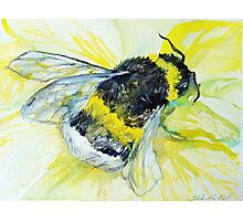 Bumble bee walk by Liz H Lovell Photographic Print