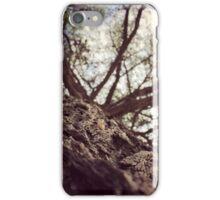 The baobab tree of tanzania  iPhone Case/Skin