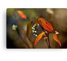 Autumn Pearls Canvas Print