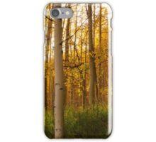 Light the Aspens iPhone Case/Skin