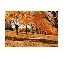 maple trees galore at fall Art Print