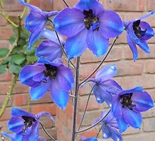 Delphiniums by Simons-Seagull