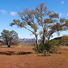 Flinders Ranges,  near Wilpena Pound, South Australia. (Study#5) by johnrf