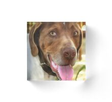 Arthur The Hunting Dog Acrylic Block