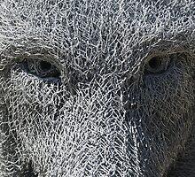 Wolf Closeup by Robyn Williams
