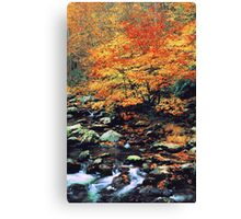 BEECHES ALONG MIDDLE PRONG Canvas Print