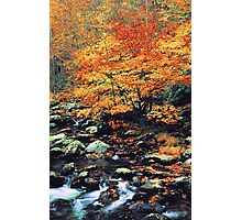 BEECHES ALONG MIDDLE PRONG Photographic Print