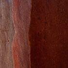 Eucalypt Bark by Skye Hohmann
