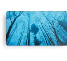 Winter trees... Metal Print