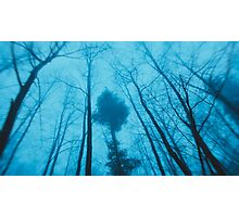 Winter trees... Photographic Print